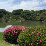 江戸の園芸 庶民の力